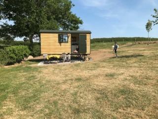 Woolly Sheep Shepherd Hut