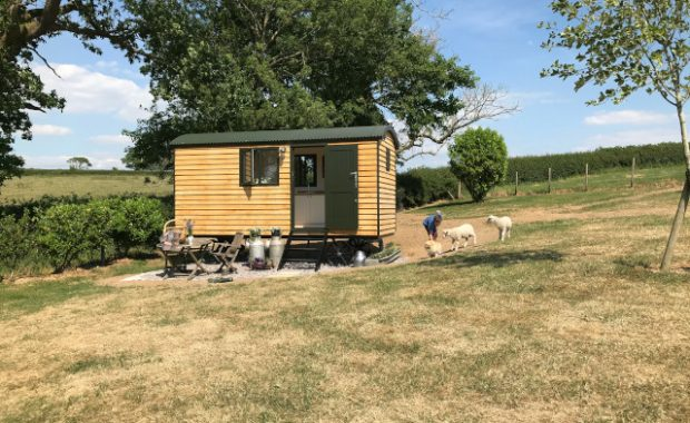Woolly Sheep Shepherd Hut